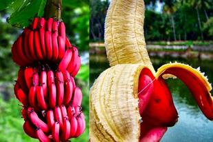Piros banán.