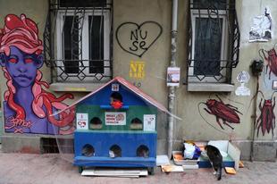 Macskák Isztambulban.