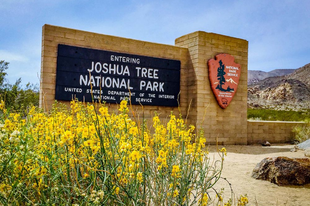 A Joshua Tree Nemzeti Park