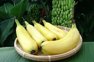 Ehető héjú banán