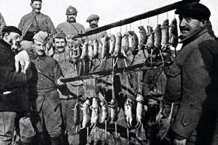 Patkányok a lövészárokban, az első világháborúban.