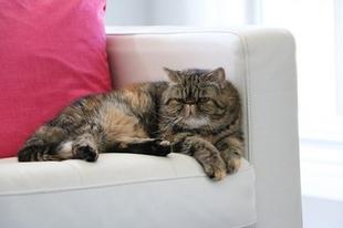 A világ legkülönlegesebb macskái