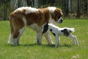 A világ 20 legkisebb állata.