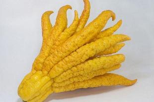 A Buddha keze citrom