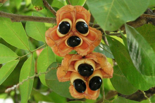 A 10 legfurább gyümölcs, amiről még sosem hallottál.