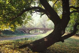 A Central Park