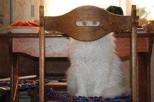 Ninja macskák
