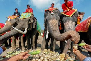 Nemzeti Elefánt nap Thaiföldön