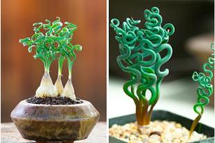 Különleges egzotikus növények.