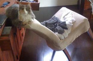 A macskák különös logikája.