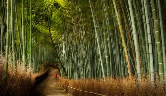 bambuszerdo_1.jpg