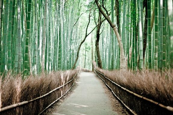 bambuszerdo_10.jpg