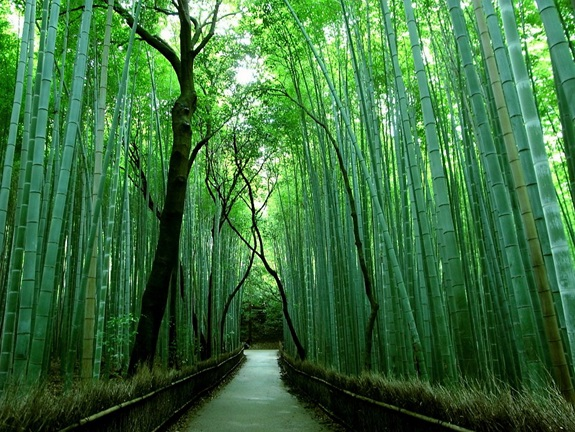 bambuszerdo_11.jpg