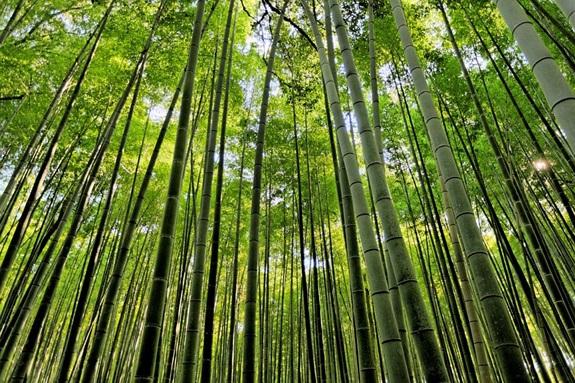 bambuszerdo_12.jpg