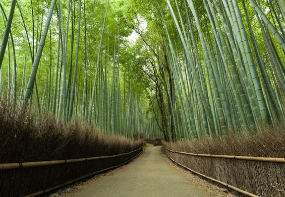 bambuszerdo_13.jpg