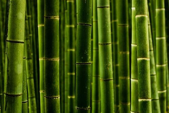 bambuszerdo_14.jpg