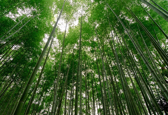 bambuszerdo_15.jpg