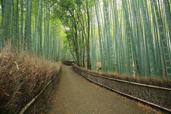 bambuszerdo_4.jpg