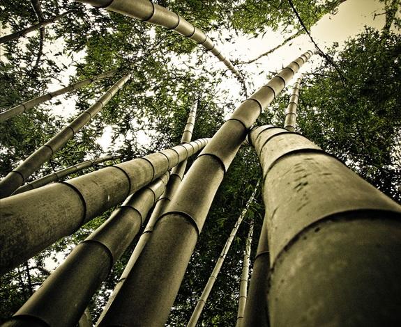 bambuszerdo_5.jpg