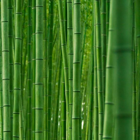 bambuszerdo_7.jpg