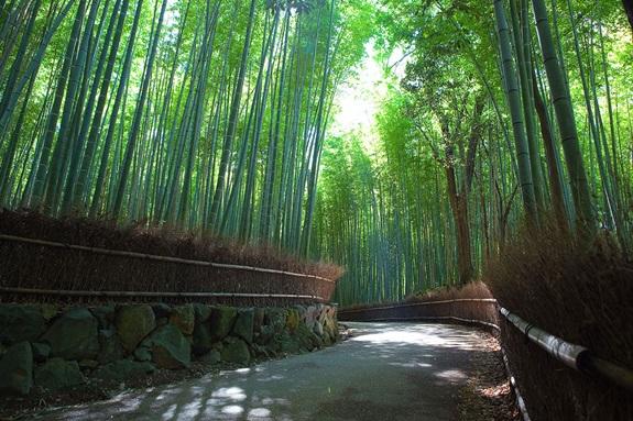 bambuszerdo_8.jpg