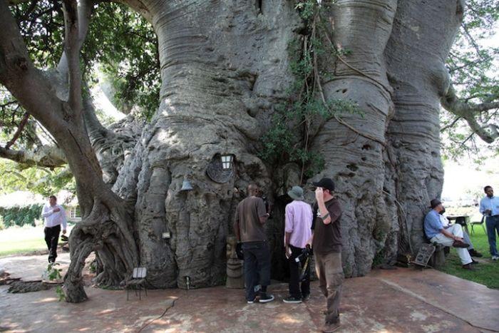 big_baobab7.jpg