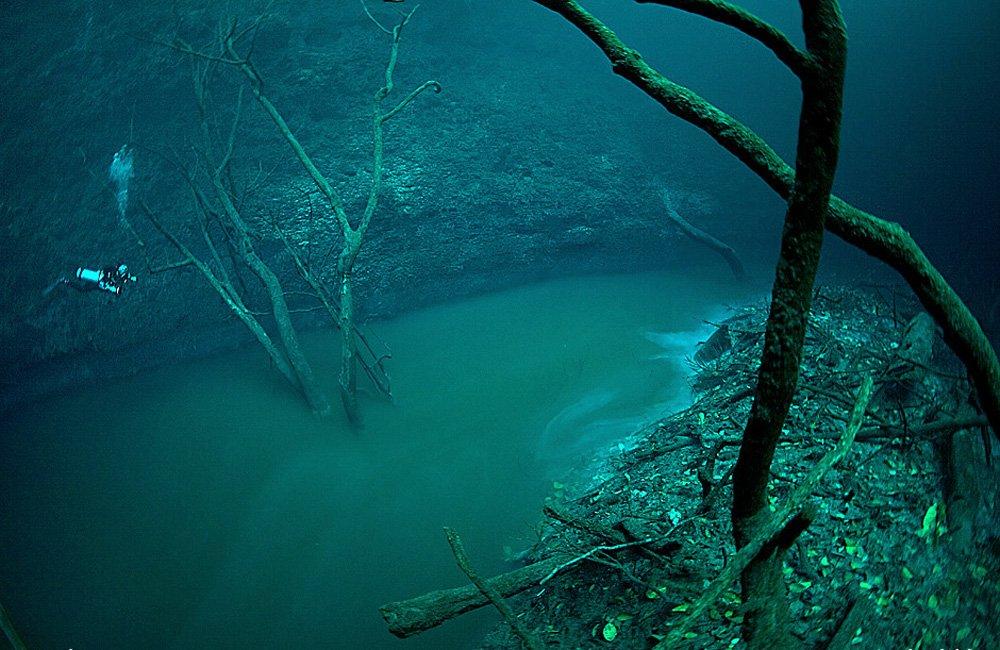 cenote_10.jpg