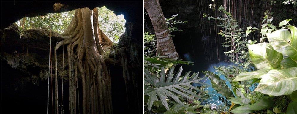 cenote_15.jpg