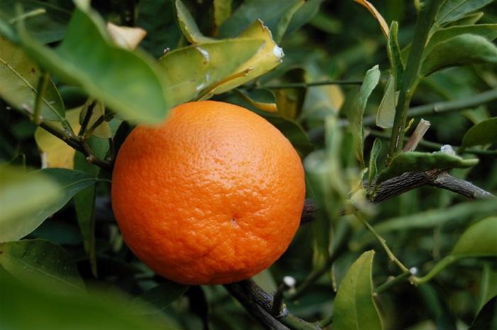 citrom12.jpg