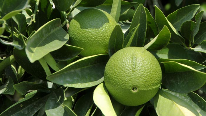 citrom2.jpg