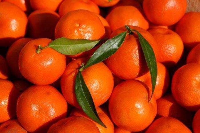 citrom4.jpg