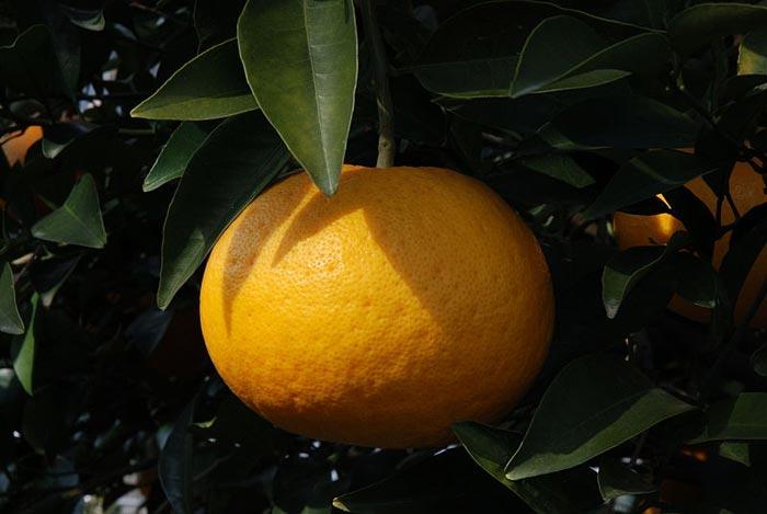 citrom5.jpg