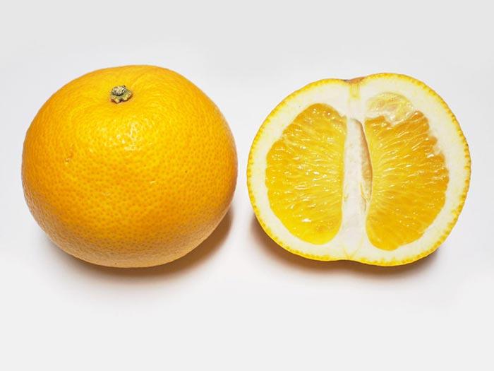 citrom8.jpg