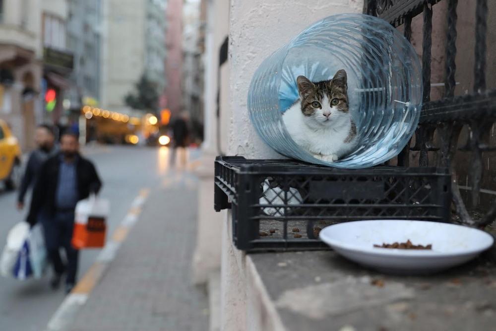 macskak_isztambulban12.jpg