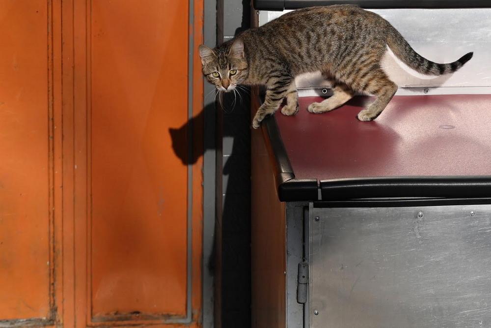 macskak_isztambulban2.jpg