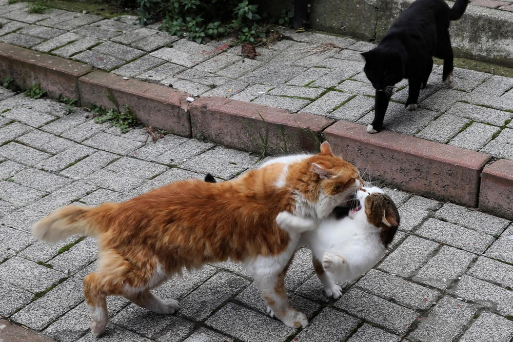 macskak_isztambulban4.jpg