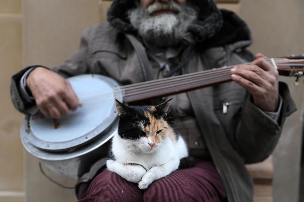 macskak_isztambulban5.jpg