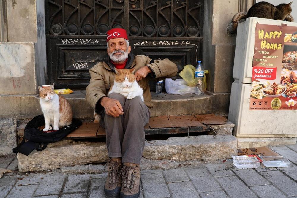 macskak_isztambulban6.jpg