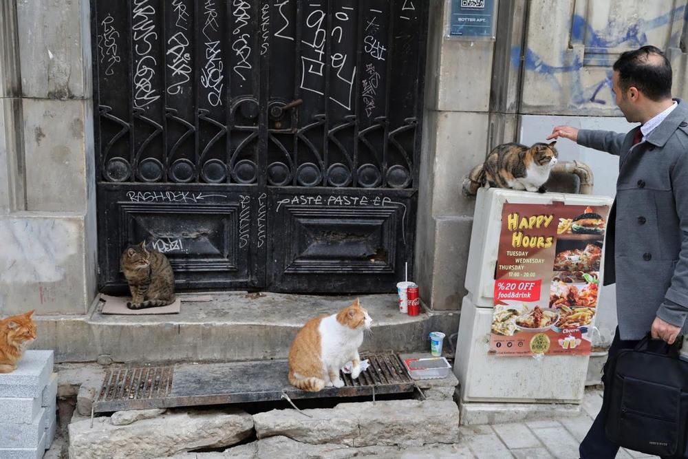 macskak_isztambulban9.jpg