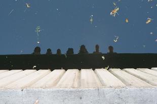 Ördögmák Portya, 2010-Békéscsaba