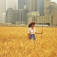 Egy magyar nő, aki búzát termelt a World Trade Center árnyékában