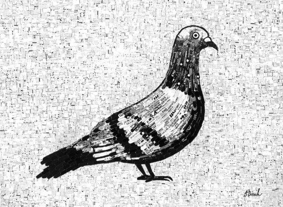 pigeon-2012.jpg