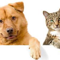 Kutya és cica a lelki egészségért