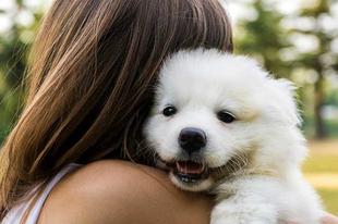 A kutyatartás 12 előnye