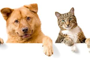 Cica vagy kutya? A személyiséged elárulja!