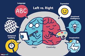 """Képtalálat a következőre: """"brain hemisphere dominance"""""""