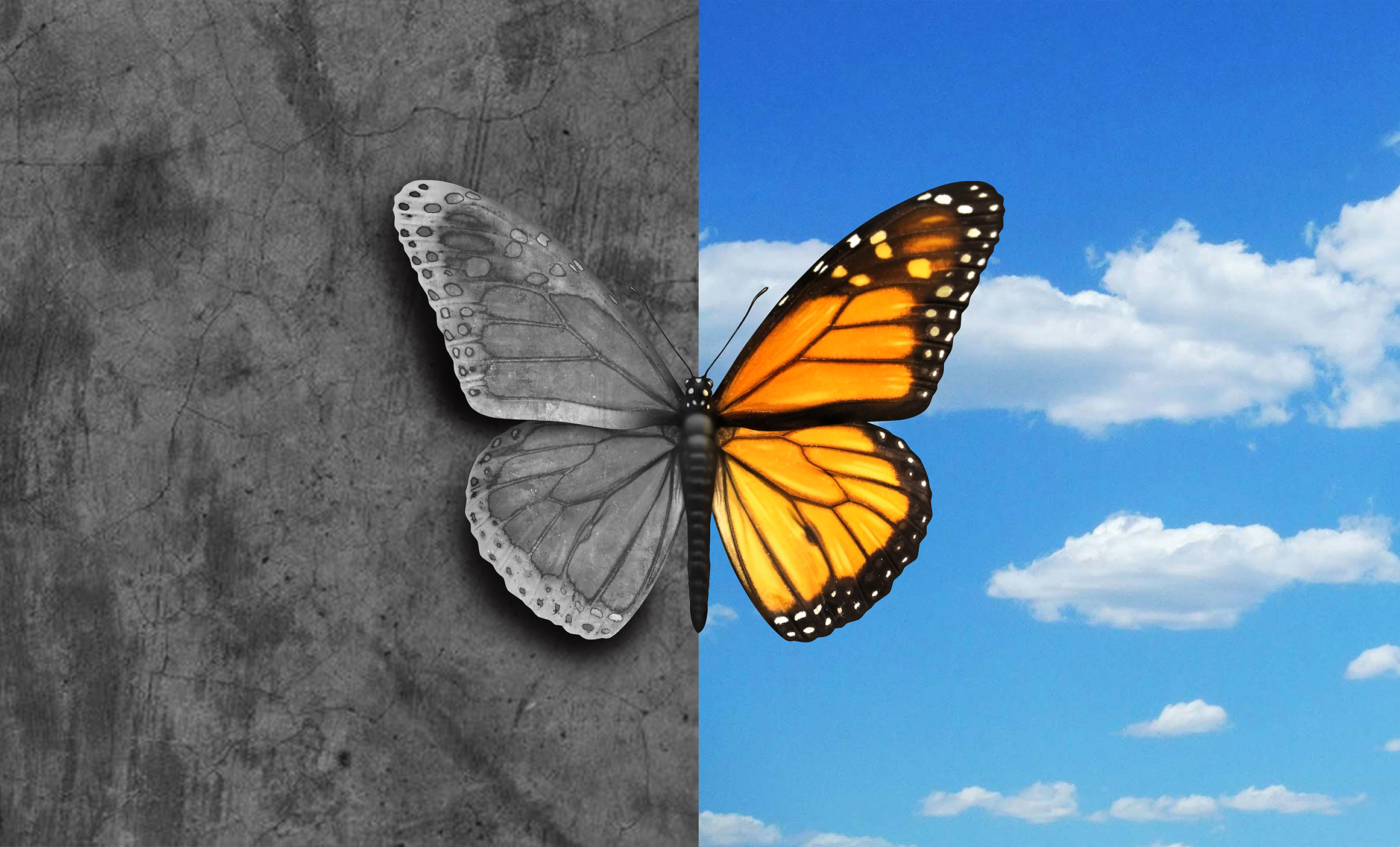 butterfly-edited2.jpg