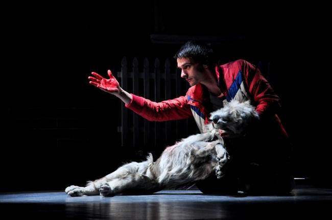 A kutya különös esete az éjszakában - Kovács Krisztián