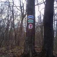 Színmenedzsment az erdőben
