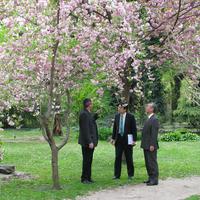 Cseresznyevirágzás ünnep